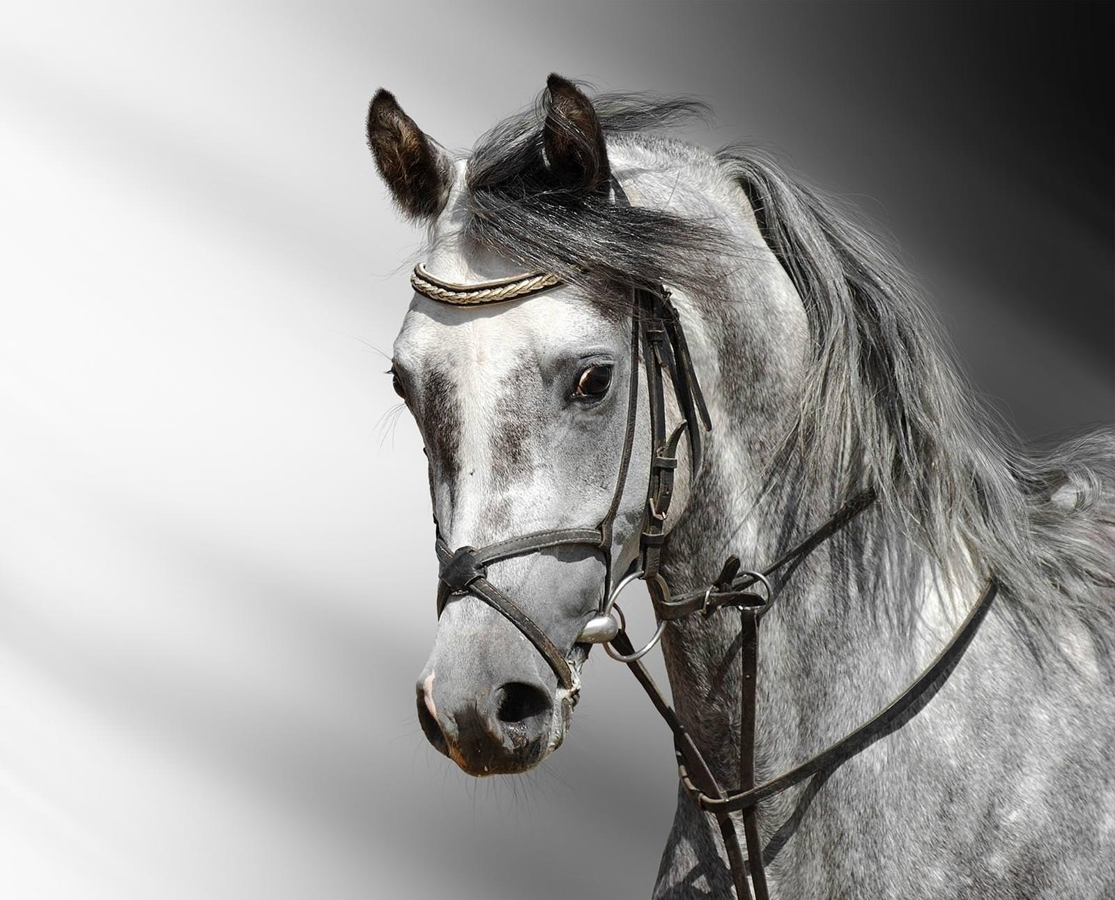 Картинка для телефона: весна, лошади, воля, загород, пасутся ... | 1291x1600
