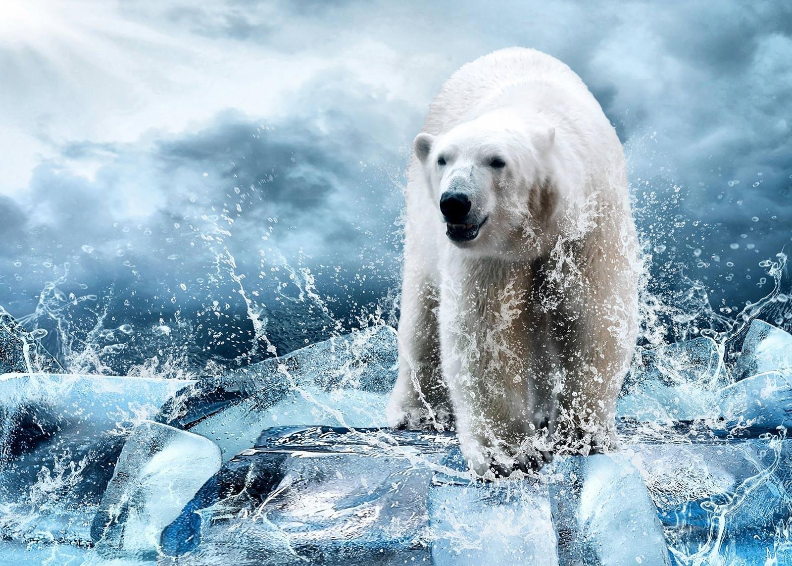 белый медведь на льдине фото