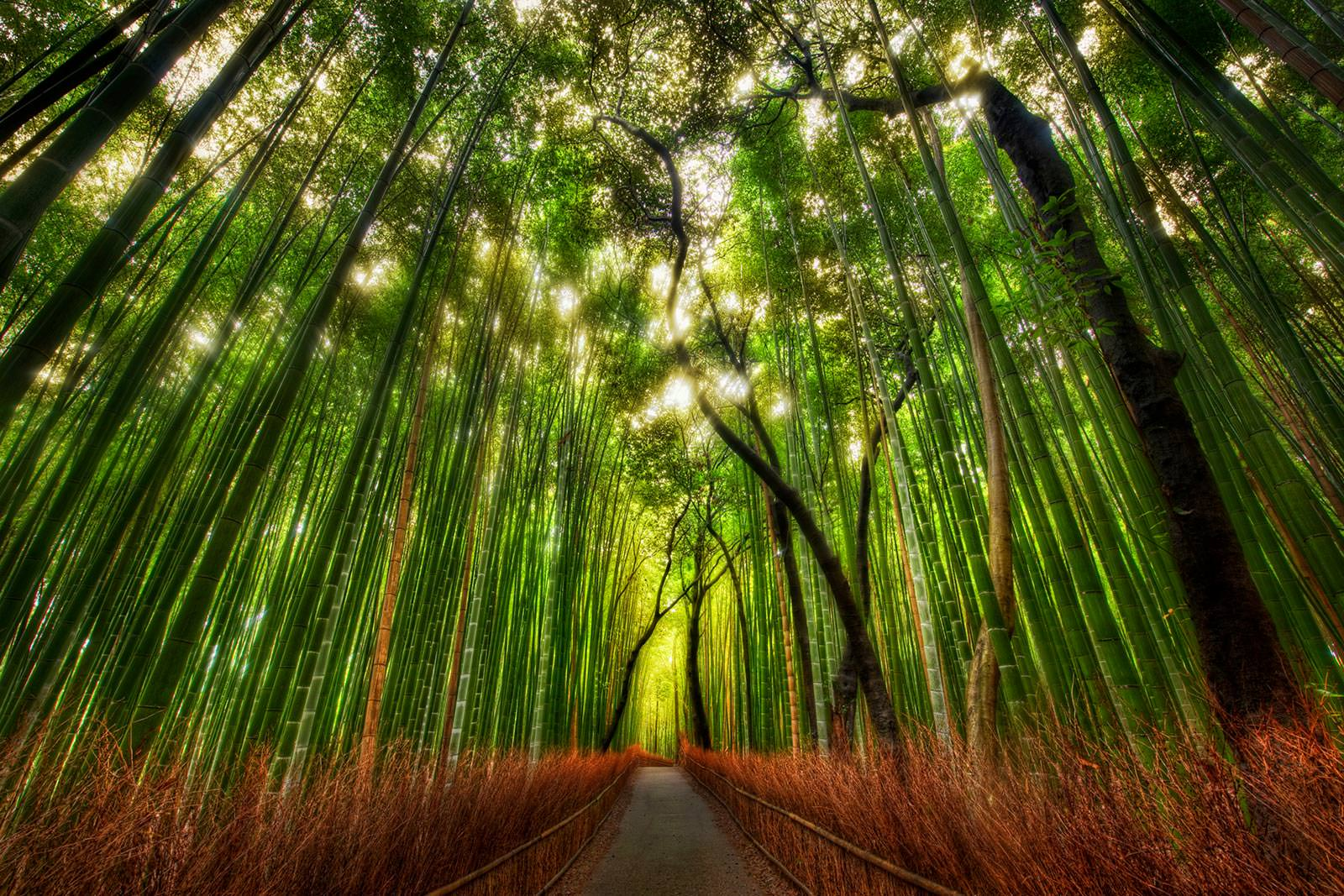 Tree forest wallpaper
