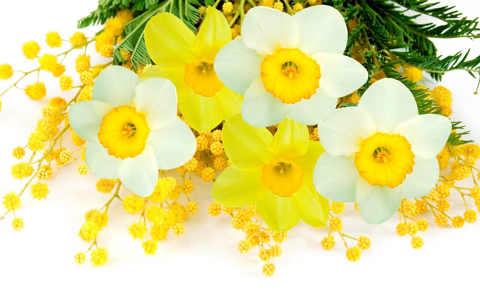 Фотообои с жёлтыми цветами
