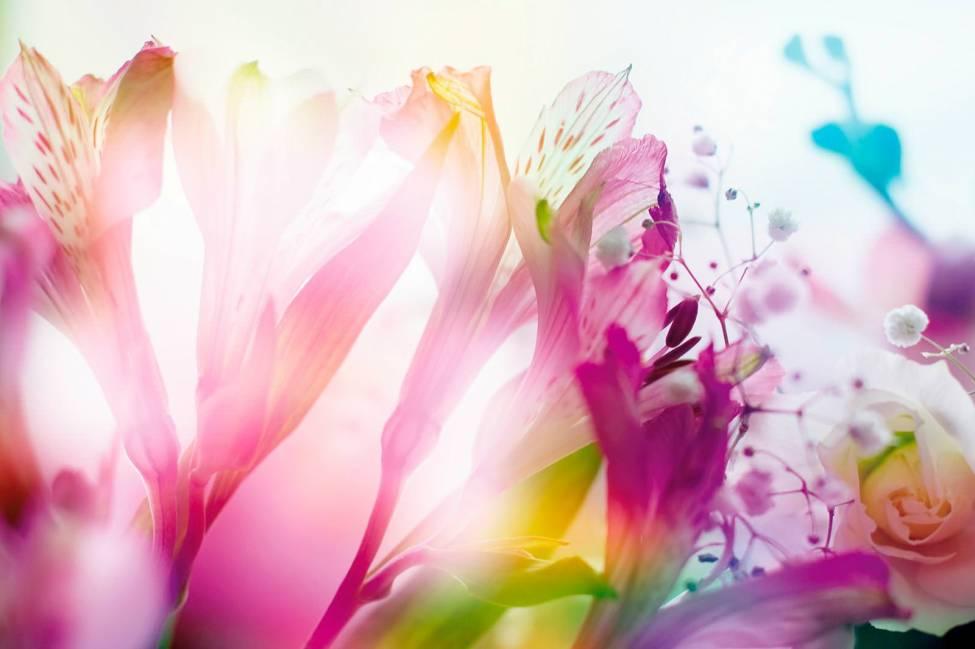Шуттерсток цветы