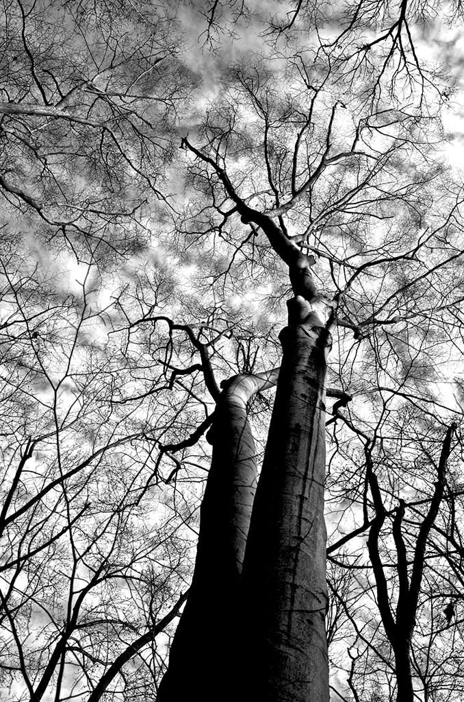 редко как сфотографировать деревья уходящие в небо эллен