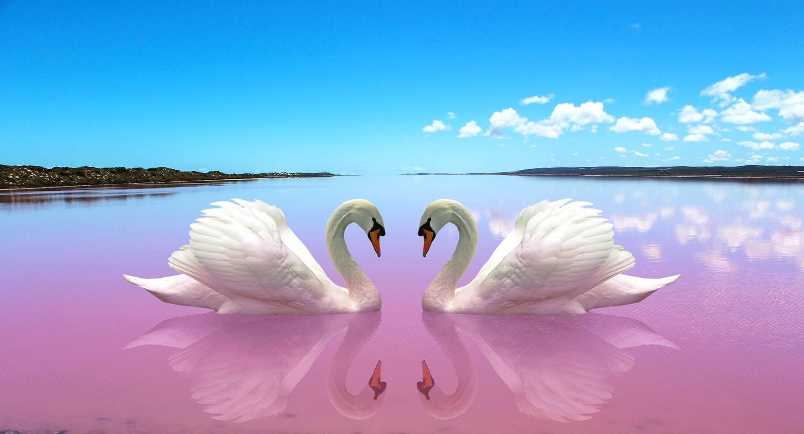 Открытка, лебеди картинки красивые