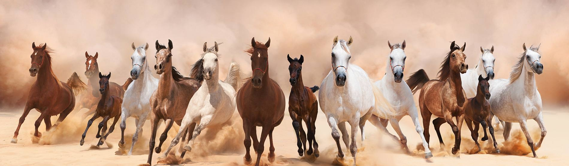 постер бегущая лошадь как-то