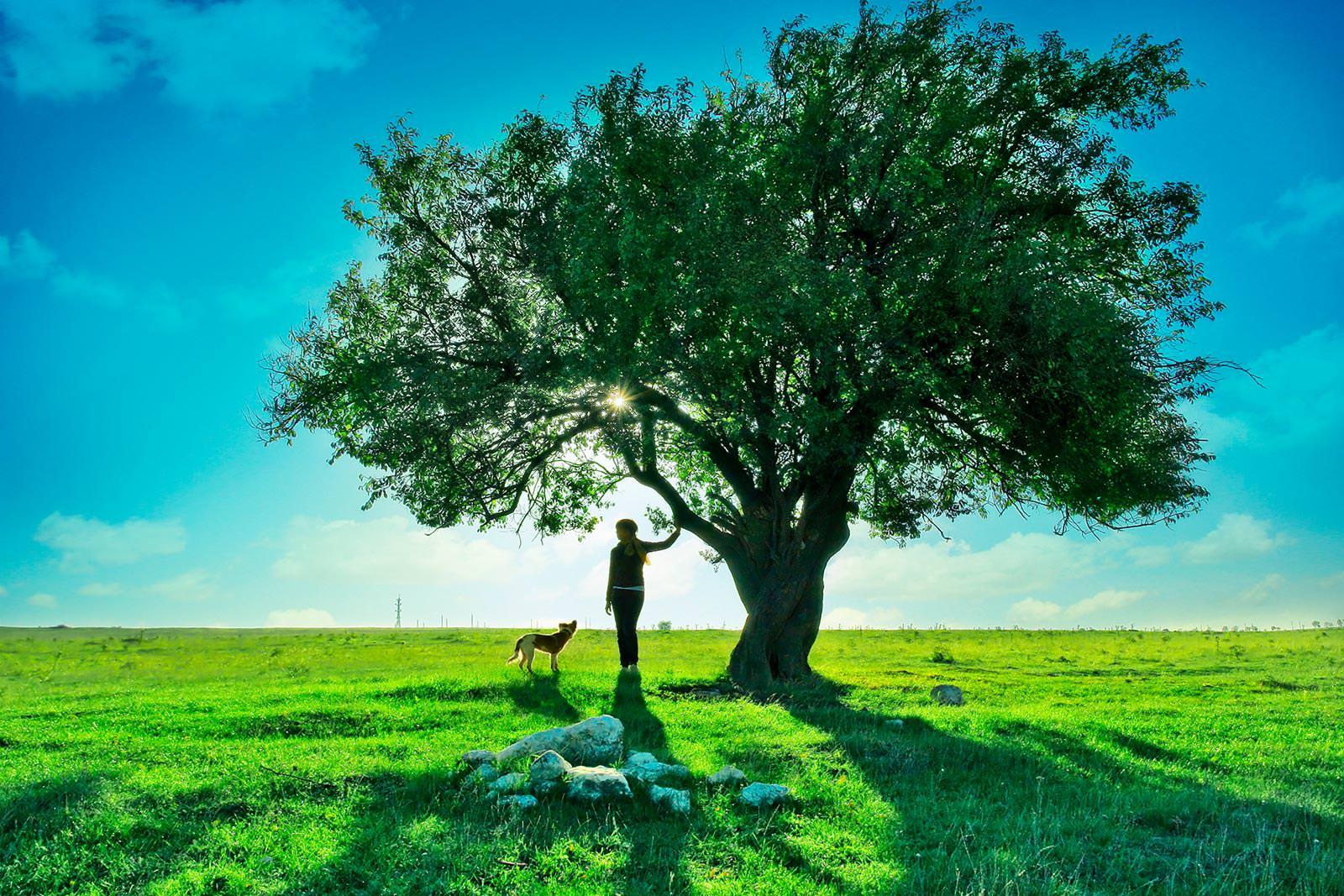 девушка поле деревья скачать