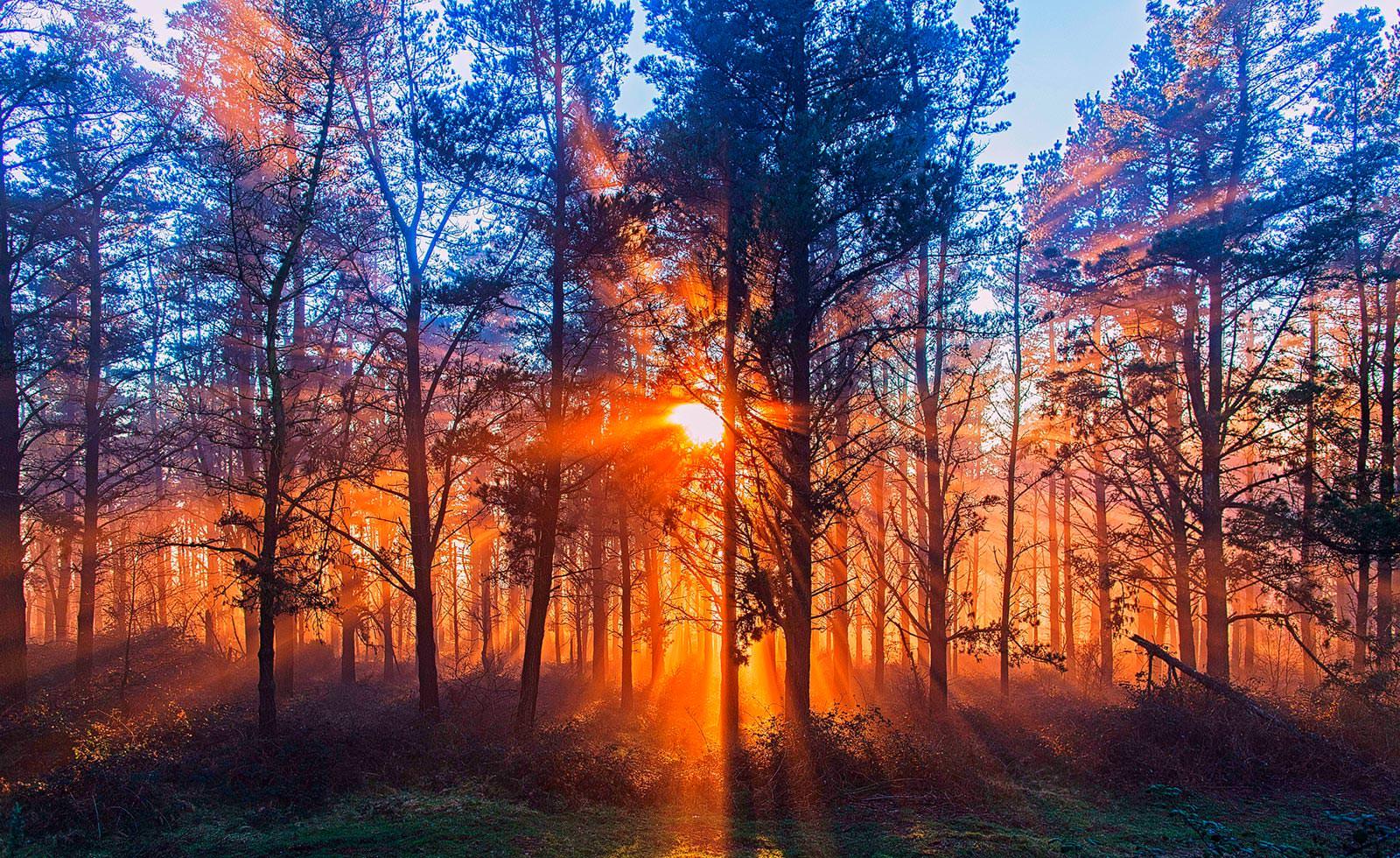картинка красивого заката в лесу компания
