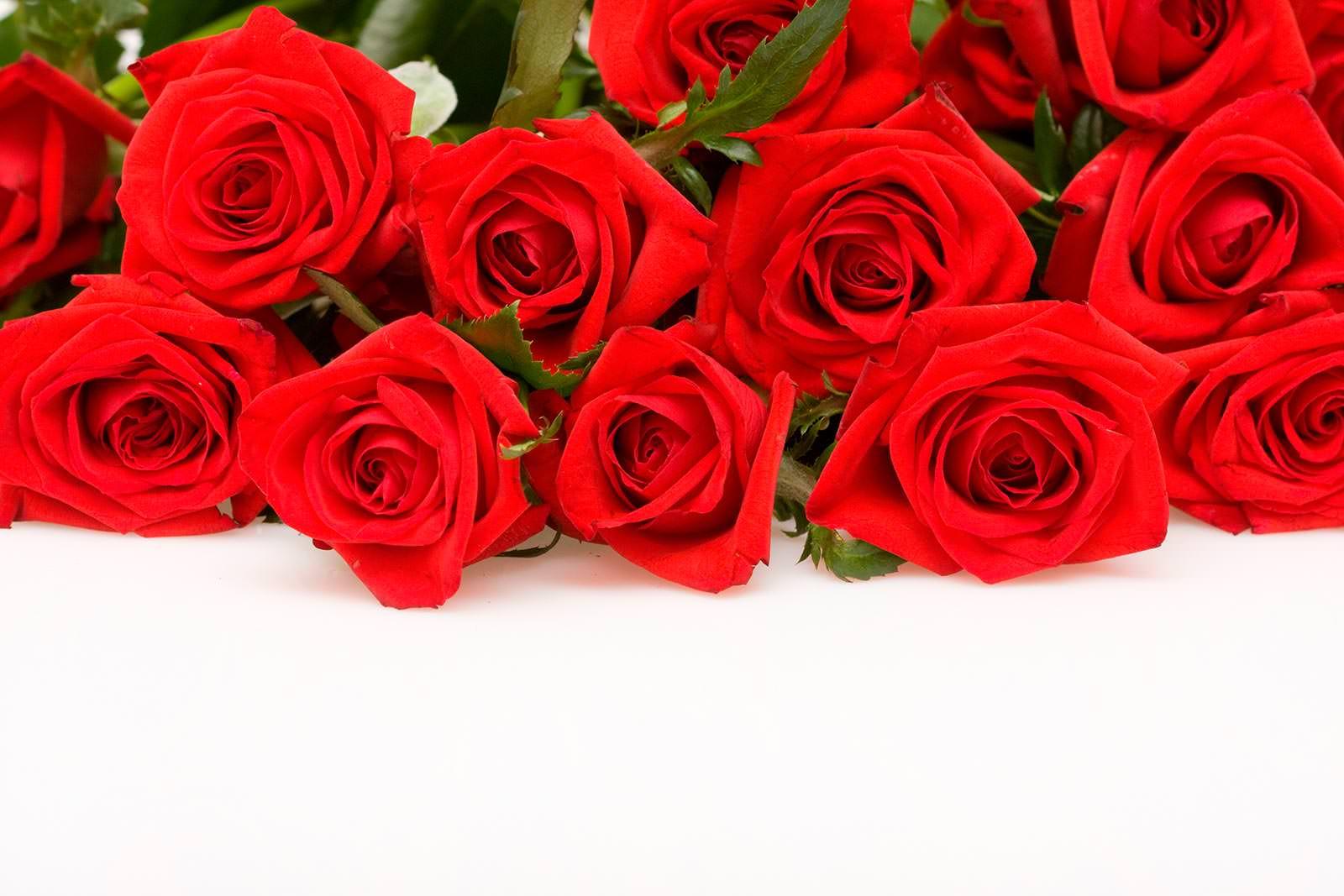 Красные розы для открытки