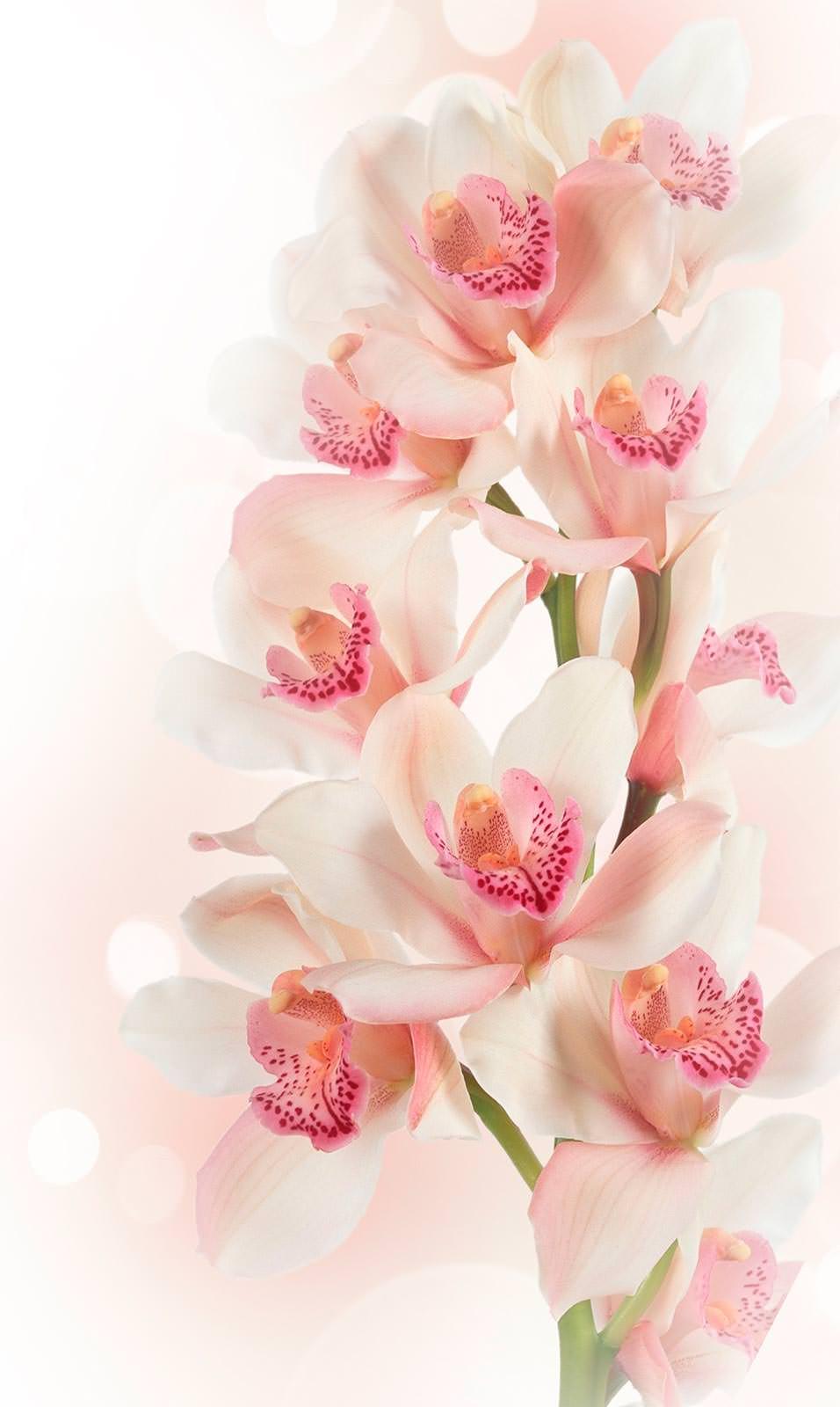 Орхидеи картинки для поздравления, прикол