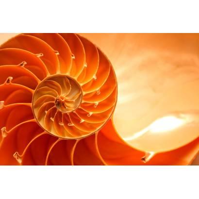 Фотообои Спираль | арт.10380