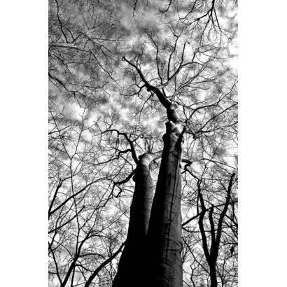 Фотообои Кроны деревьев | арт.10641