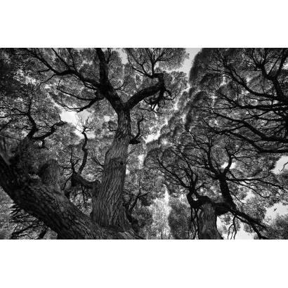 Фотообои Кроны деревьев | арт.10642
