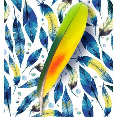 Фотообои Яркие перья | арт.10687