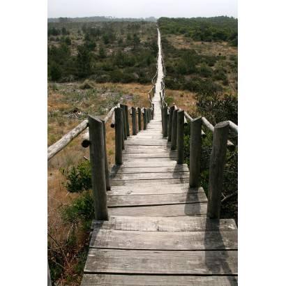 Фотообои Лестница | арт.11151