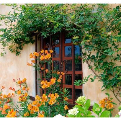 Фотообои Окно, обвитое цветами | арт.11171