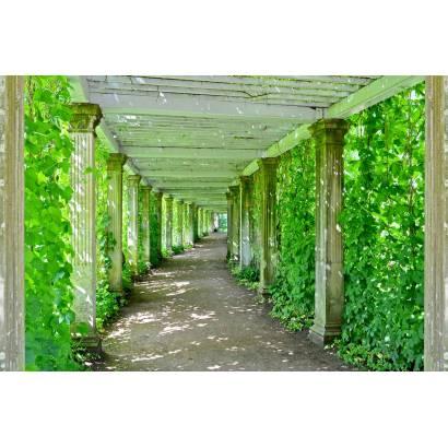 Фотообои Зелёная аллея | арт.11496