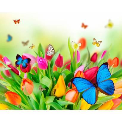 Фотообои Бабочки | арт.14272