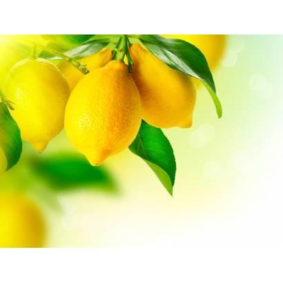 Фотообои Лимоны на ветке | арт.15162