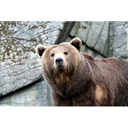 Фотообои Медведь | арт.16101
