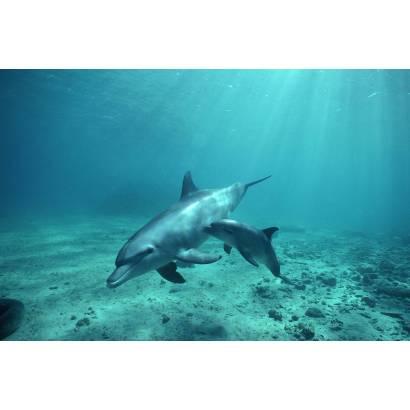 Фотообои Дельфины | арт.16103