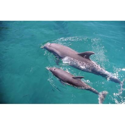 Фотообои Дельфины | арт.16107