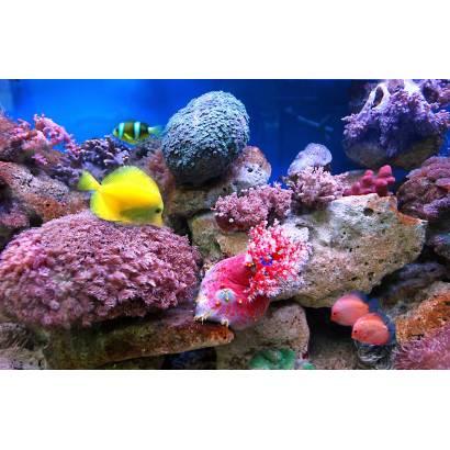Фотообои Кораллы | арт.16125