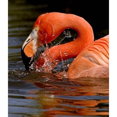 Фотообои Фламинго | арт.16126