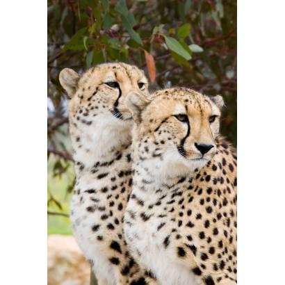 Фотообои Леопарды | арт.16129