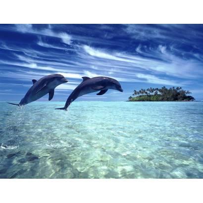 Фотообои Дельфины | арт.1613