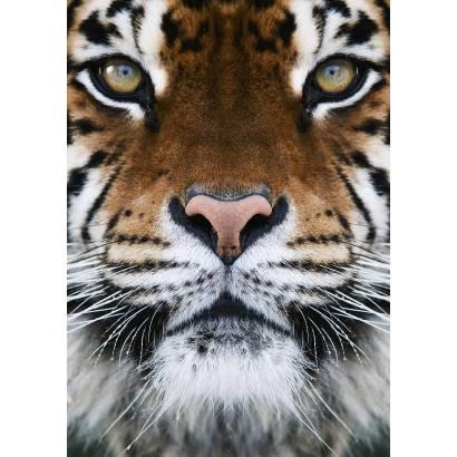 Фотообои Тигр | арт.16140