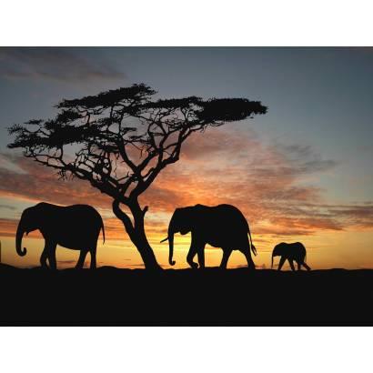 Фотообои Слоны | арт.16144