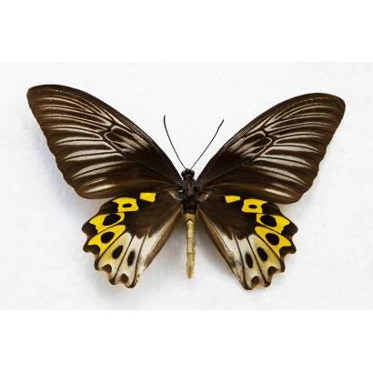 Фотообои Бабочка | арт.16150