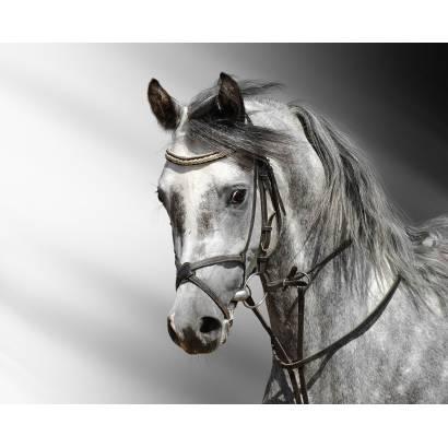 Фотообои Лошадь | арт.16152