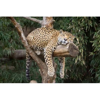 Фотообои Леопард | арт.16153