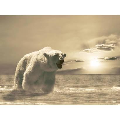 Фотообои Медведь | арт.16157
