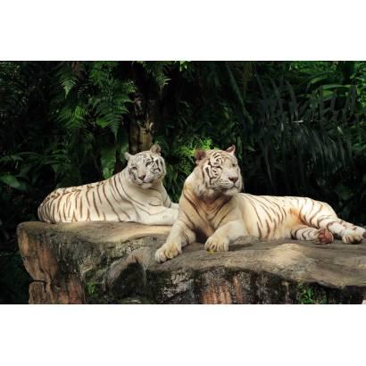 Фотообои Тигры | арт.16161