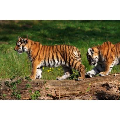 Фотообои Тигры | арт.16164