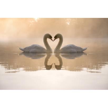 Фотообои Лебеди | арт.16165