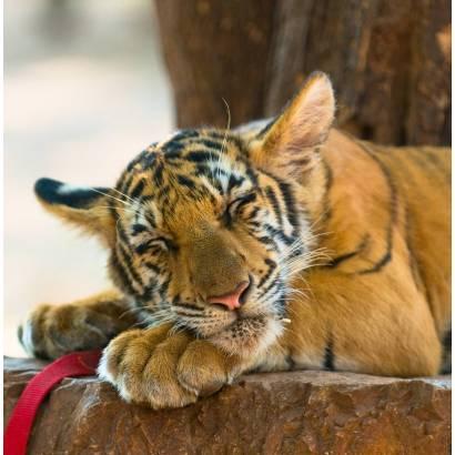 Фотообои Тигр | арт.16169