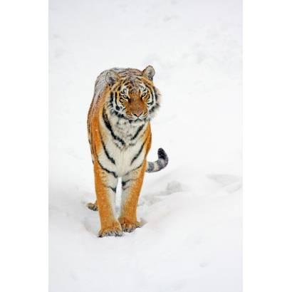 Фотообои Тигры | арт.16173