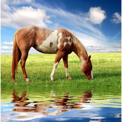 Фотообои Лошадь | арт.16178