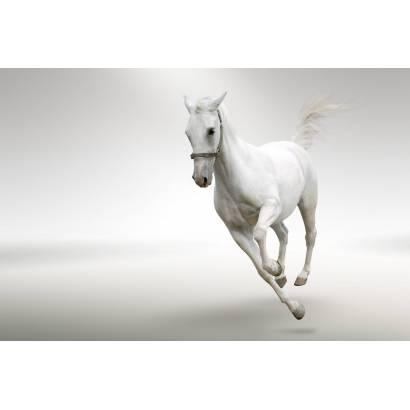 Фотообои Лошадь | арт.16181