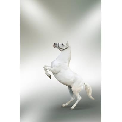Фотообои Лошадь | арт.16182