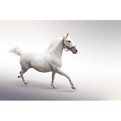 Фотообои Лошадь | арт.16183