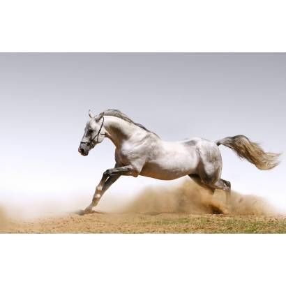 Фотообои Лошадь | арт.16184