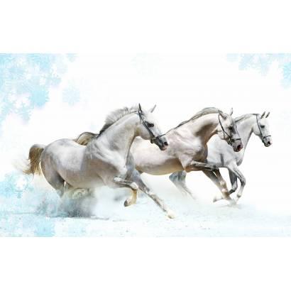Фотообои Лошадь | арт.16185