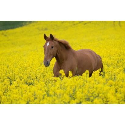 Фотообои Лошадь | арт.16186