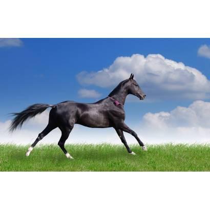 Фотообои Лошадь | арт.16187