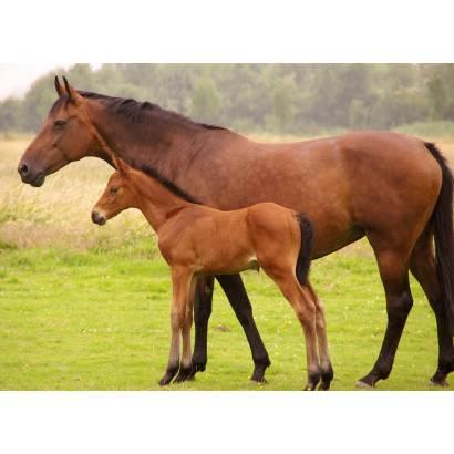Фотообои Лошадь | арт.16189