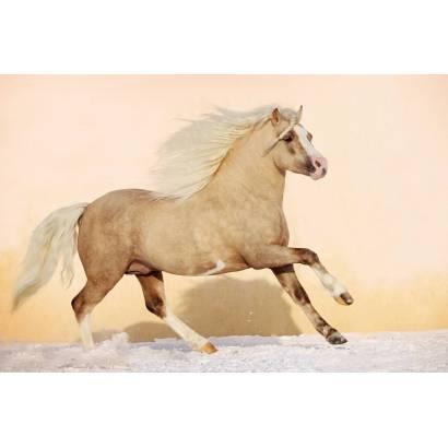 Фотообои Лошадь | арт.16192