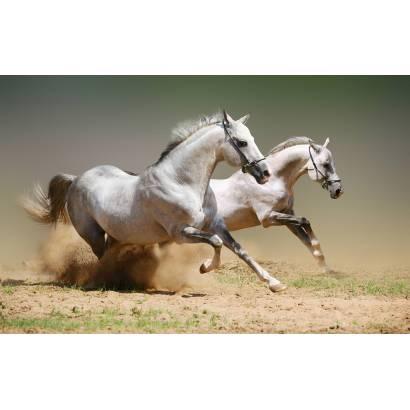 Фотообои Лошадь | арт.16195